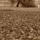 Autunno a St. James Park . London UK