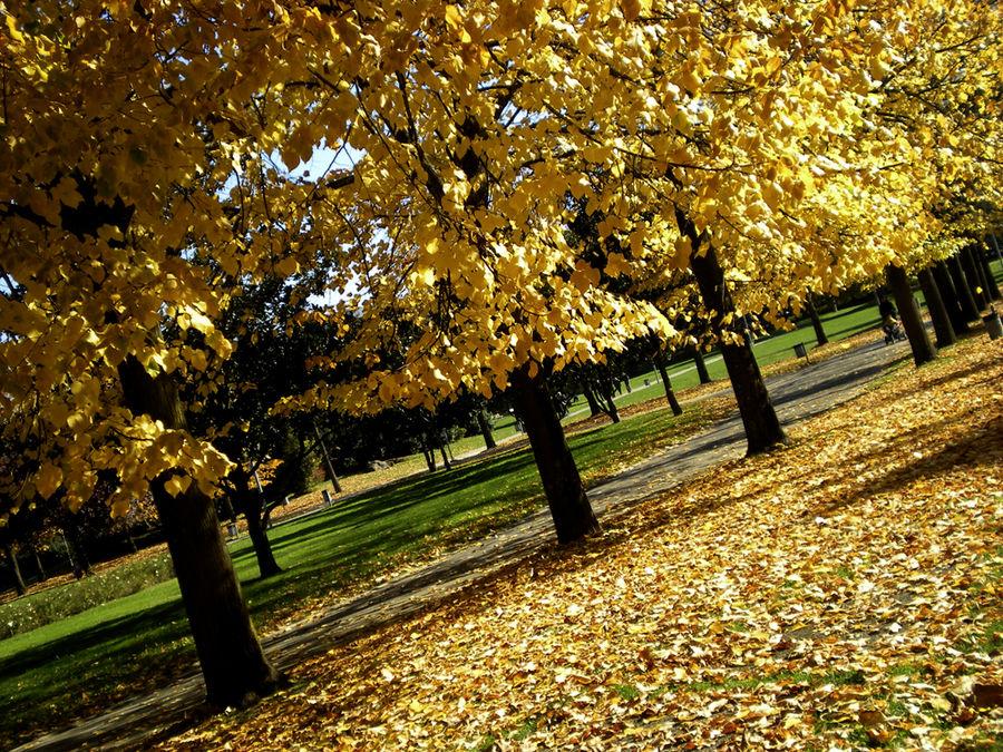 autunno al parco....