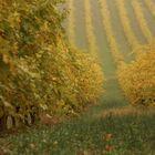 autunno fra le viti
