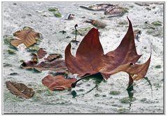 autunno triste....