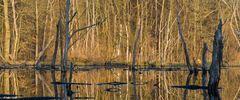 Auwaldsee im Frühjahr
