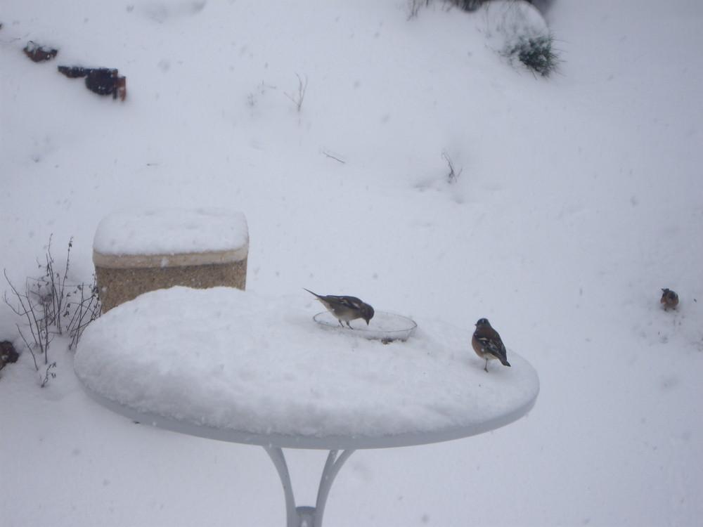Avec la neige !!!!!!!!!