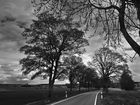 avenue des tilleuls