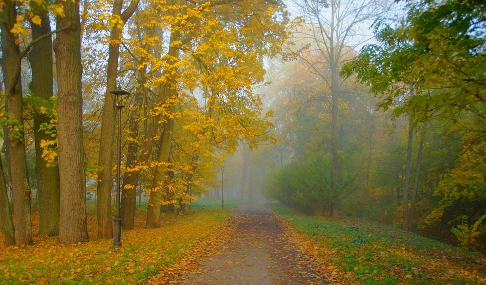 Avenue of broken lichter