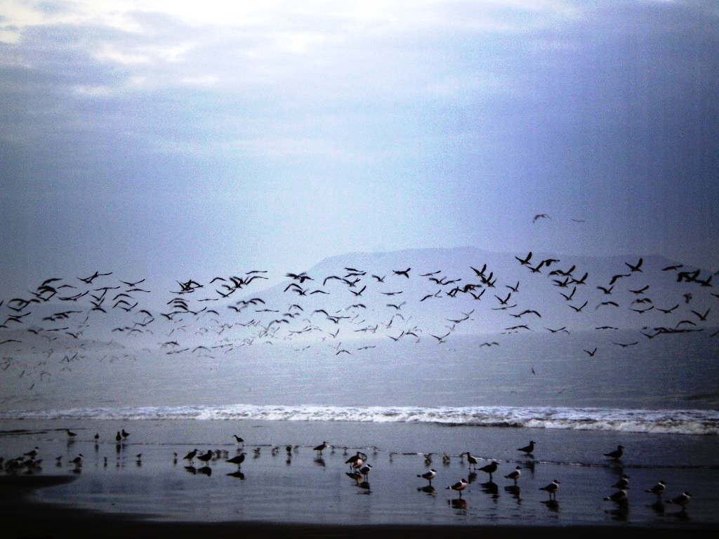 Aves al atardecer