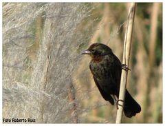 Aves de la reserva ecológica 5