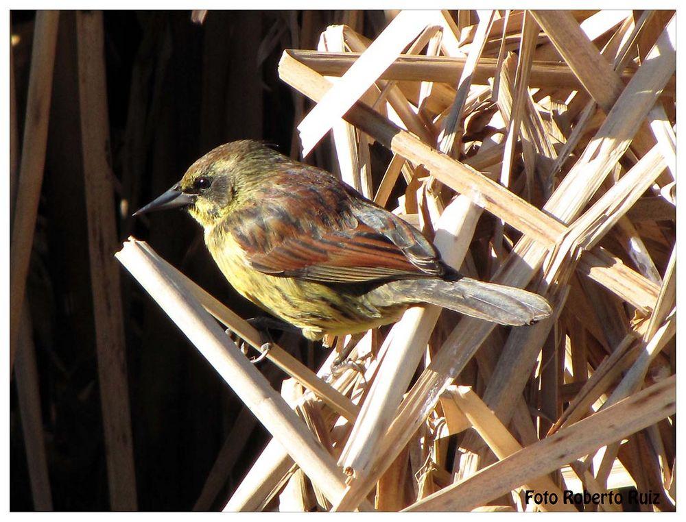 Aves de la reserva ecológica 7