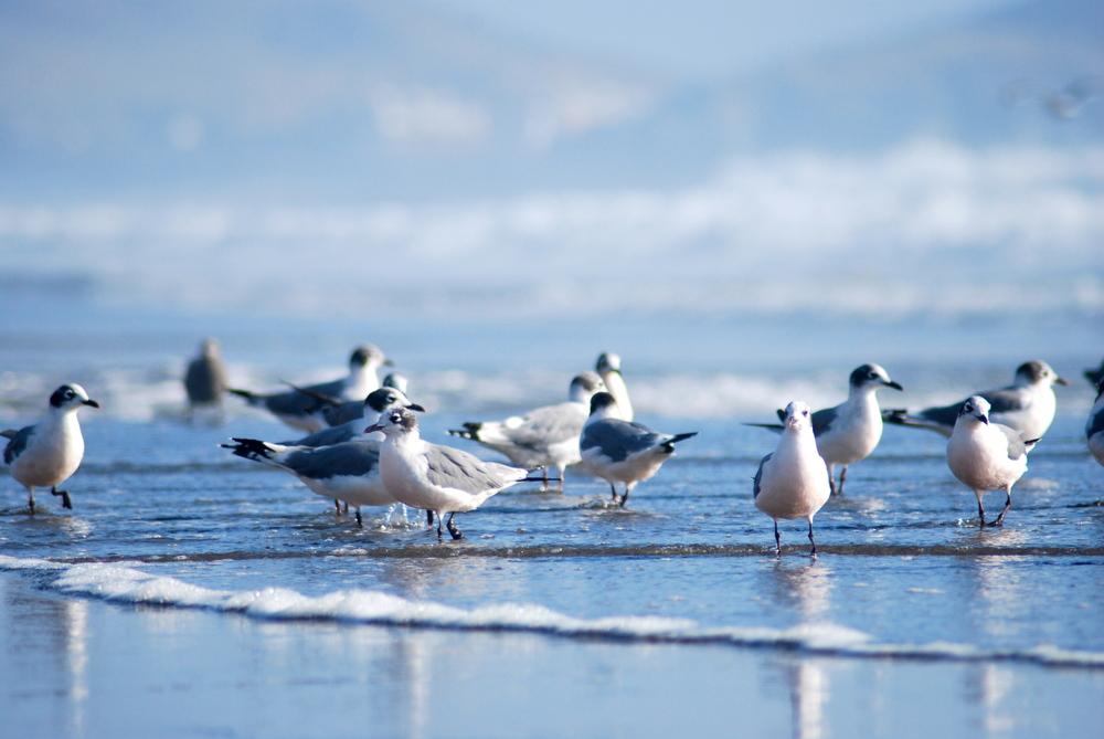 Aves en la orilla