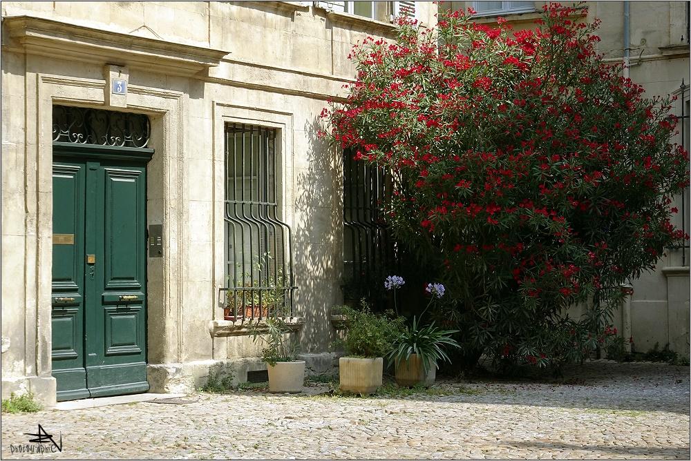 Avignon - Balade