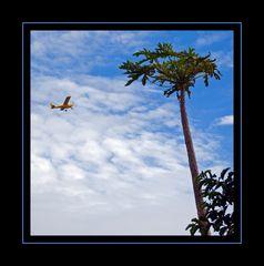 avion jaune
