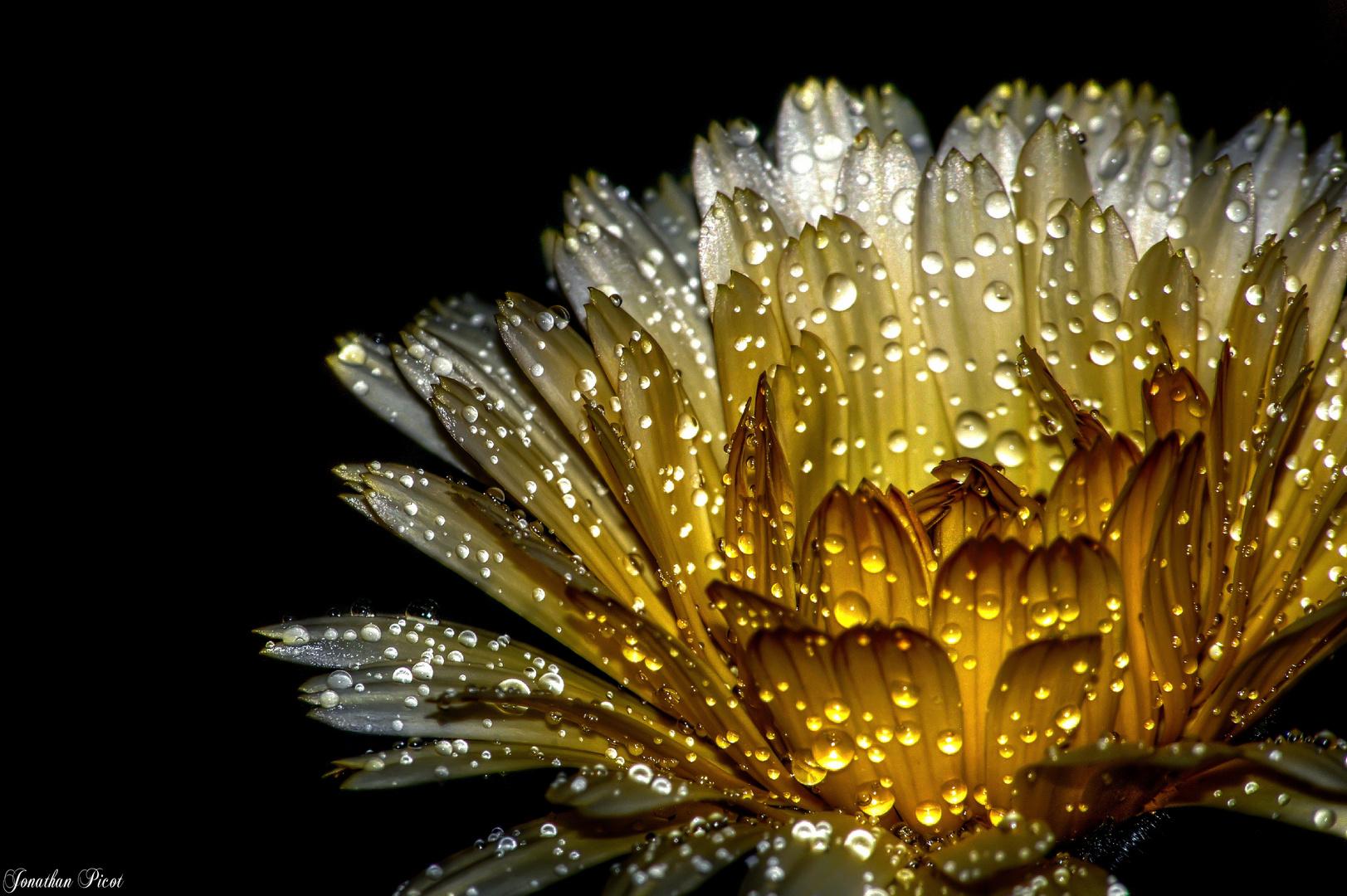 Avoir un coeur rempli d'or