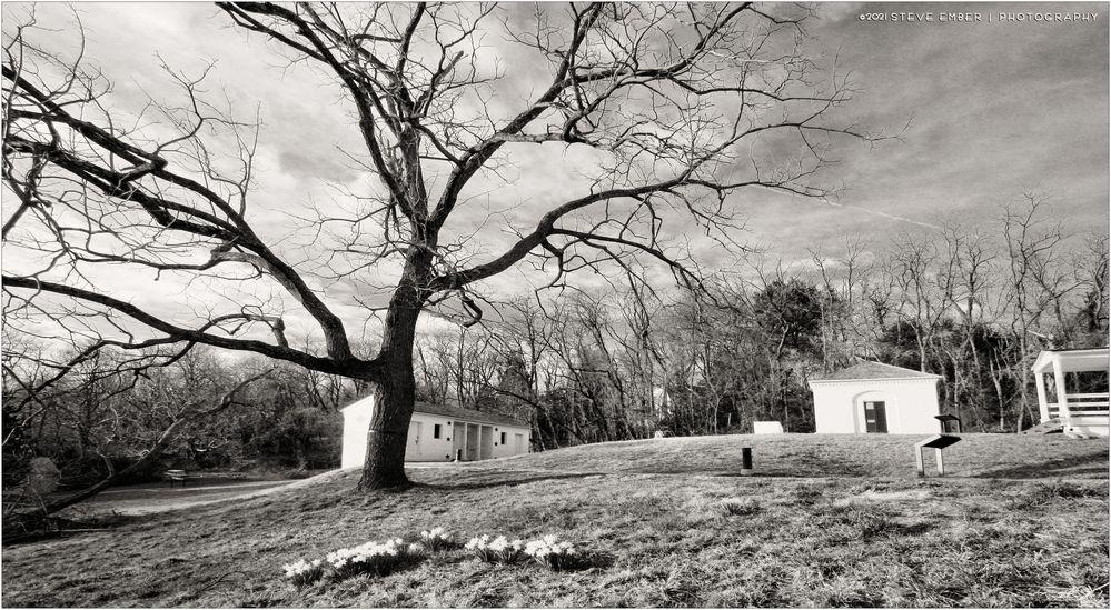 Awaiting Springtime on a Virginia Hillside