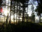 Awaking sun
