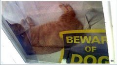 Aware of Dog!