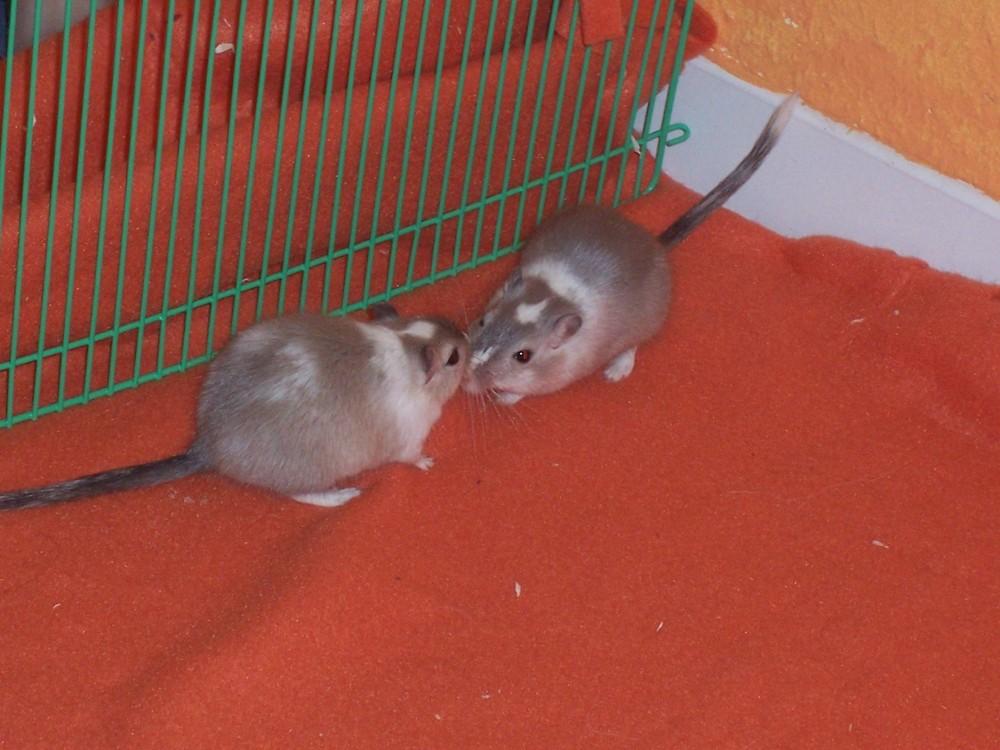 Ayleen und Baylee
