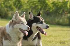 Aysha und Cäsar