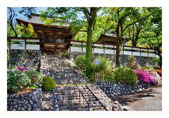 Azalea blooming in temple -1