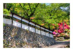Azalea blooming in temple -2