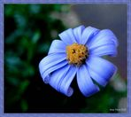 Azul y pequeñita.