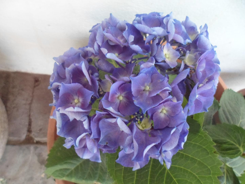 azulina..............