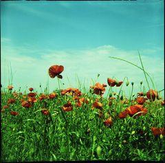 Azur-Rot-Grün