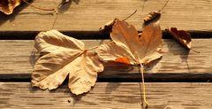 B wie Blätter