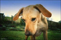 Hunde & Sonstiges