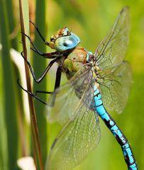Baby Blue eyes ...