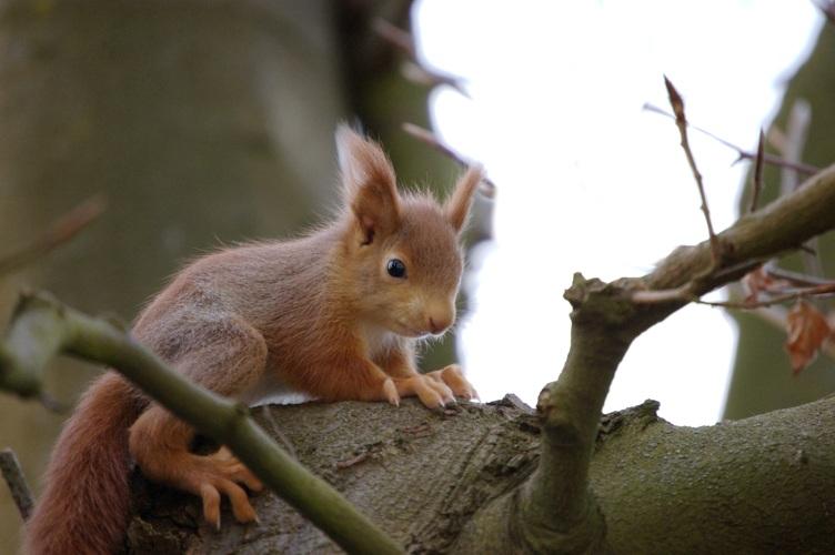 Baby Eichhörnchen Foto & Bild | tiere, wildlife, wildlife ...
