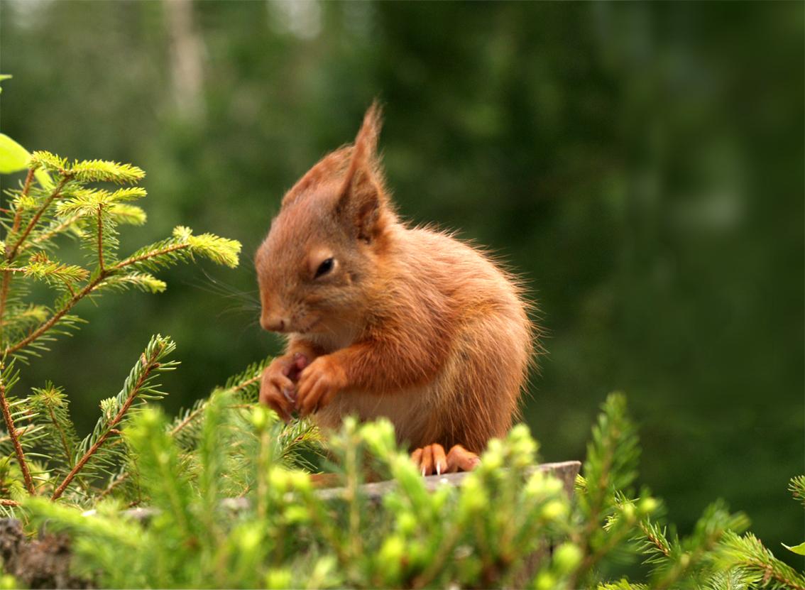 Baby-Eichhörnchen im Wind Foto & Bild | tiere, tierkinder ...