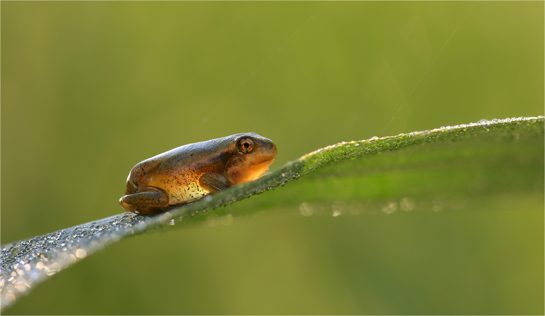 Baby-Froggy....