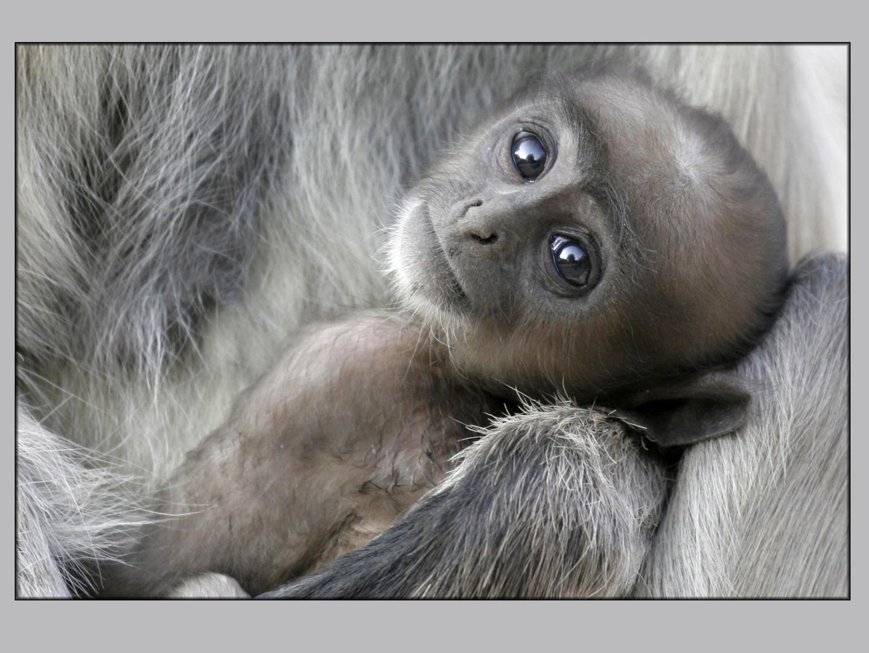 Baby im Arm der Mutter