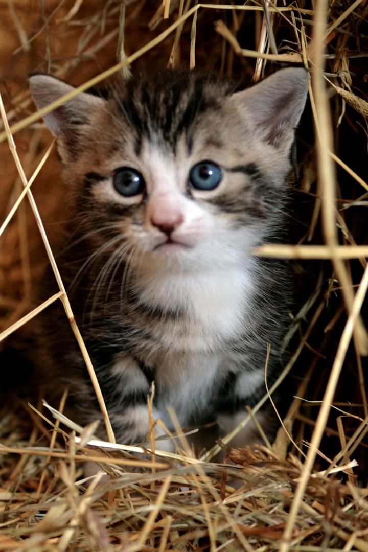 Baby Katze Foto Bild Tiere Haustiere Katzen Bilder Auf