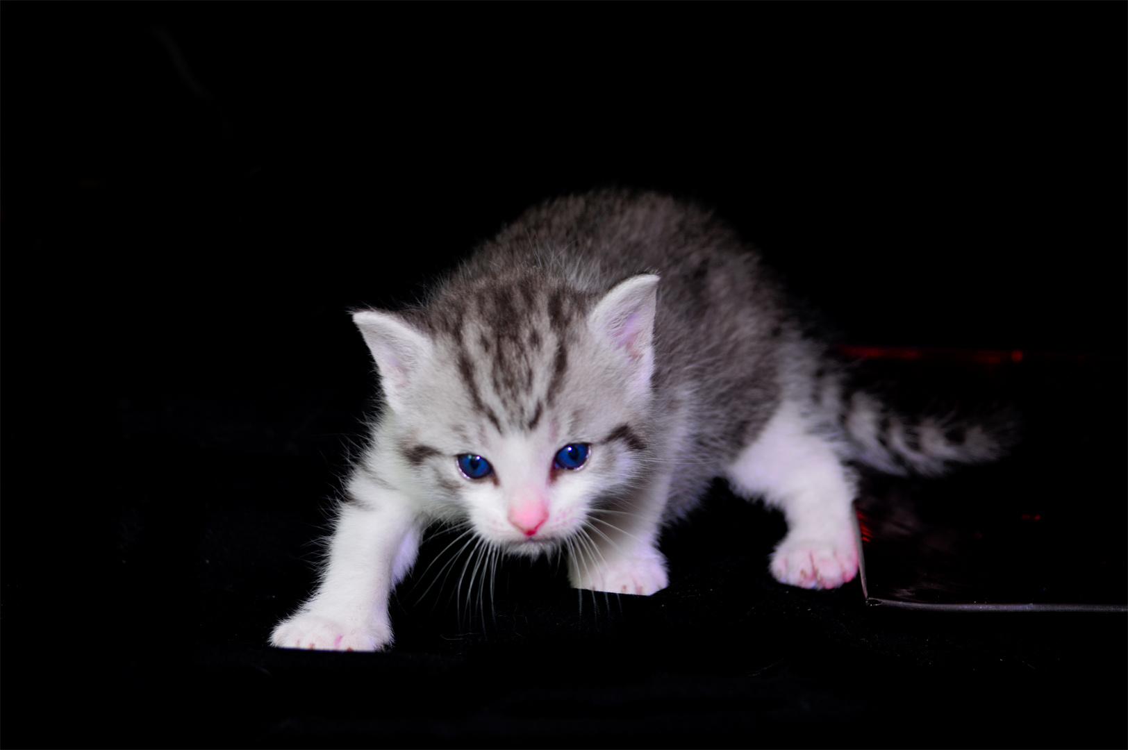 Baby Katze 5