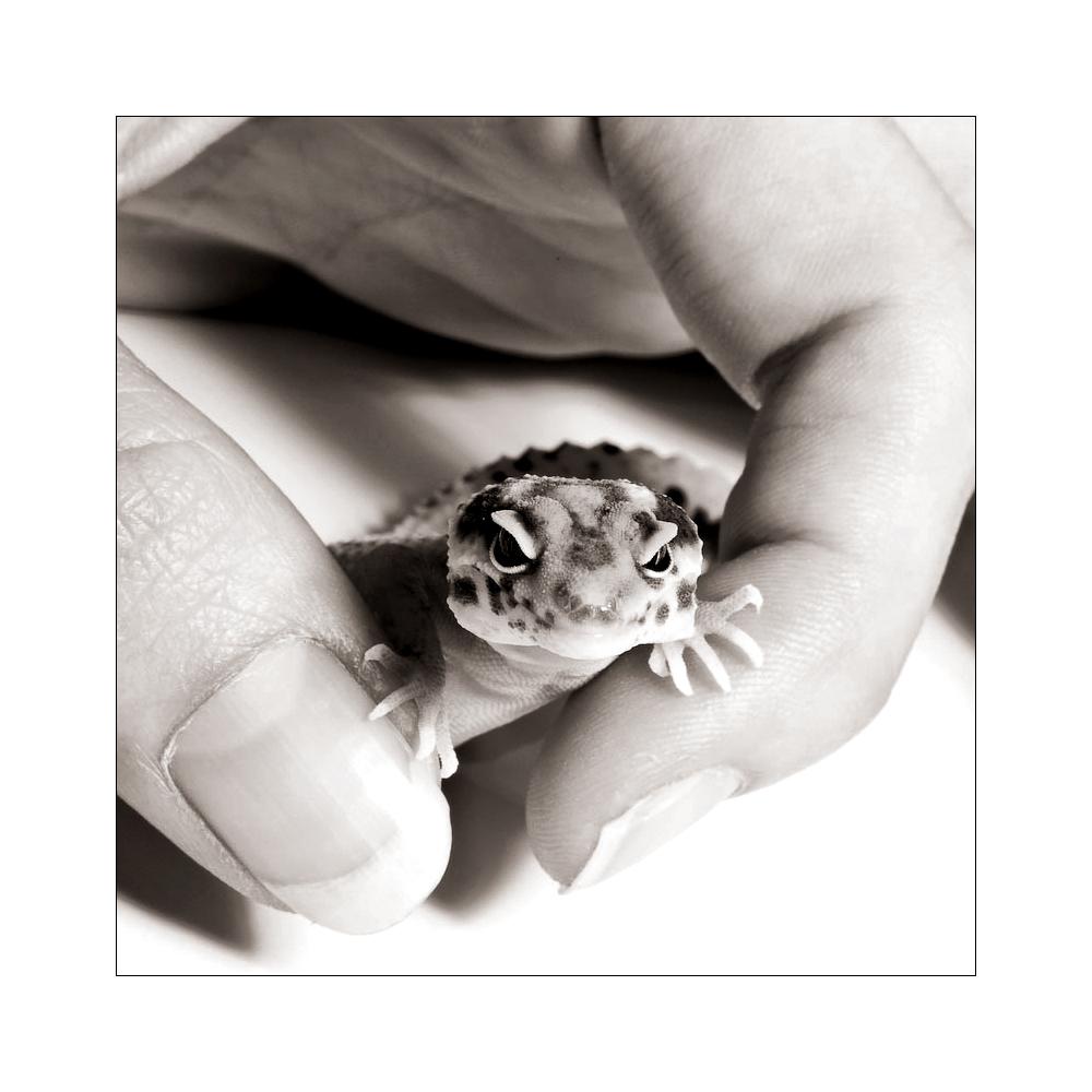 Baby Leopardgecko