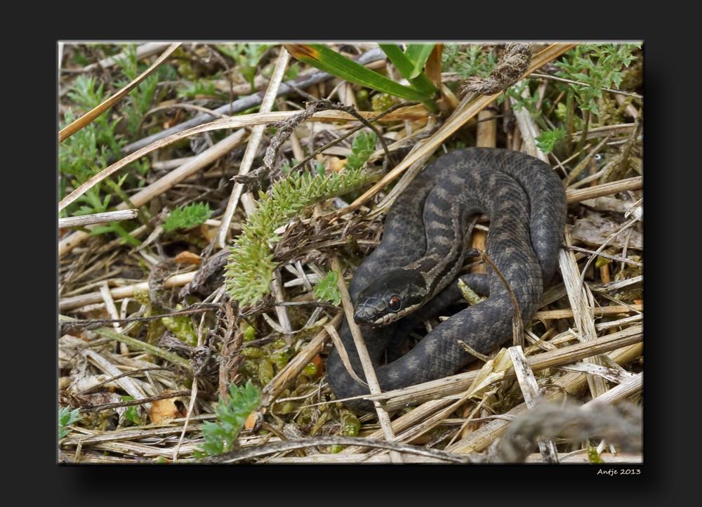Baby Schlange