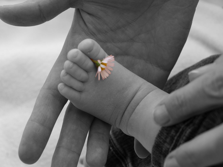 Babyfuß mit Gänseblümchen
