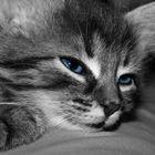 Babykatze :)