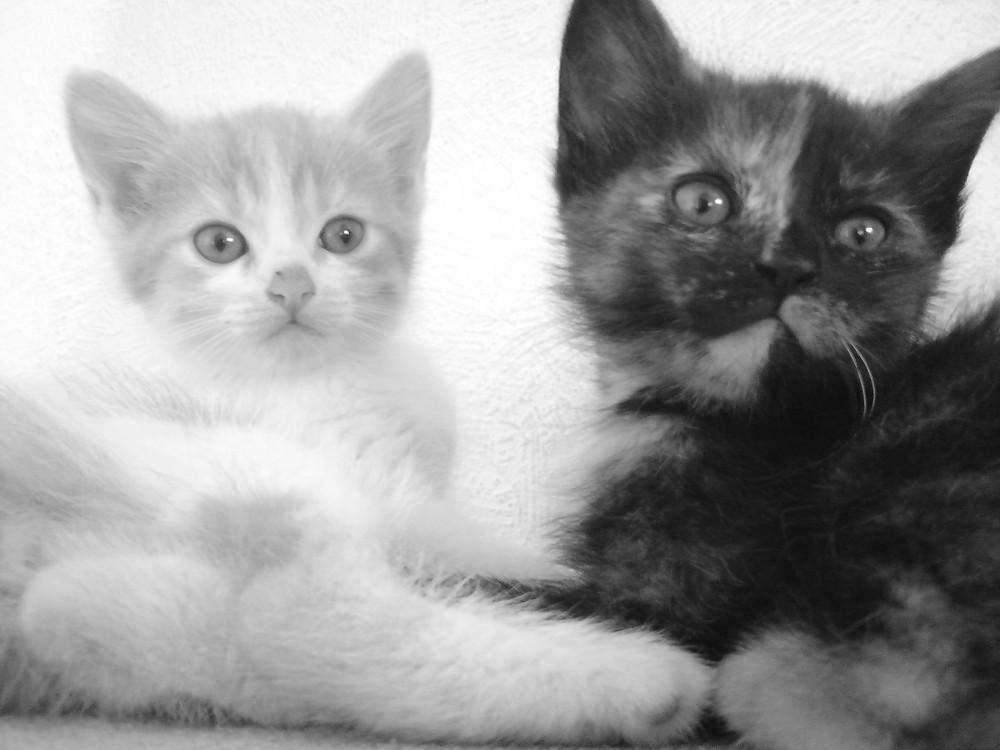 Babykatzen. 3. Wurf.