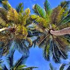 Bacardi Feeling, Caribbean Dreaming