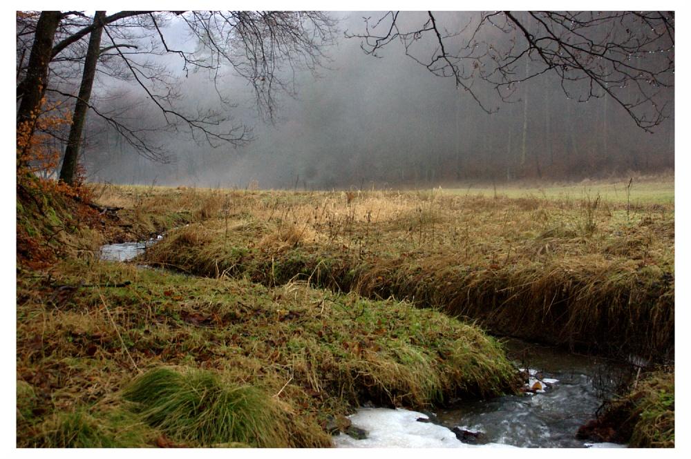 Bach im Nationalpark Kellerwald