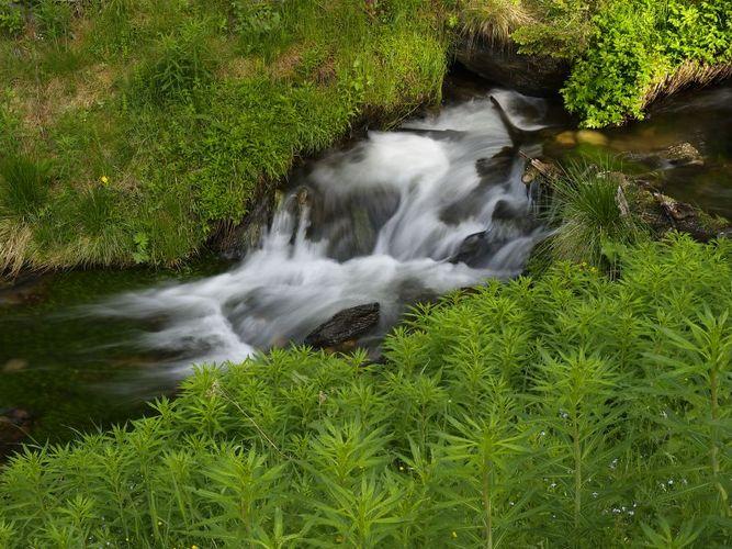 Bach im österreichischen Nationalpark Nockberge