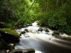 Bach / Irland - Killarney Nationalpark
