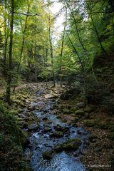 Bachbeet und Wald