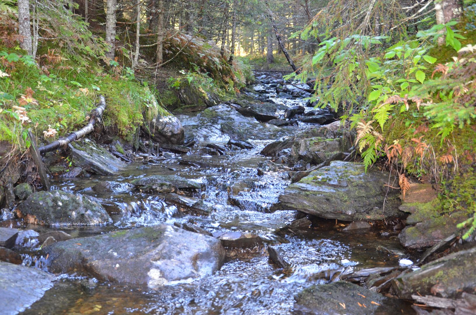 Bachlauf in den Bergen Mittelnorwegens