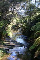 Bachlauf in den Blue Mountains, Australien
