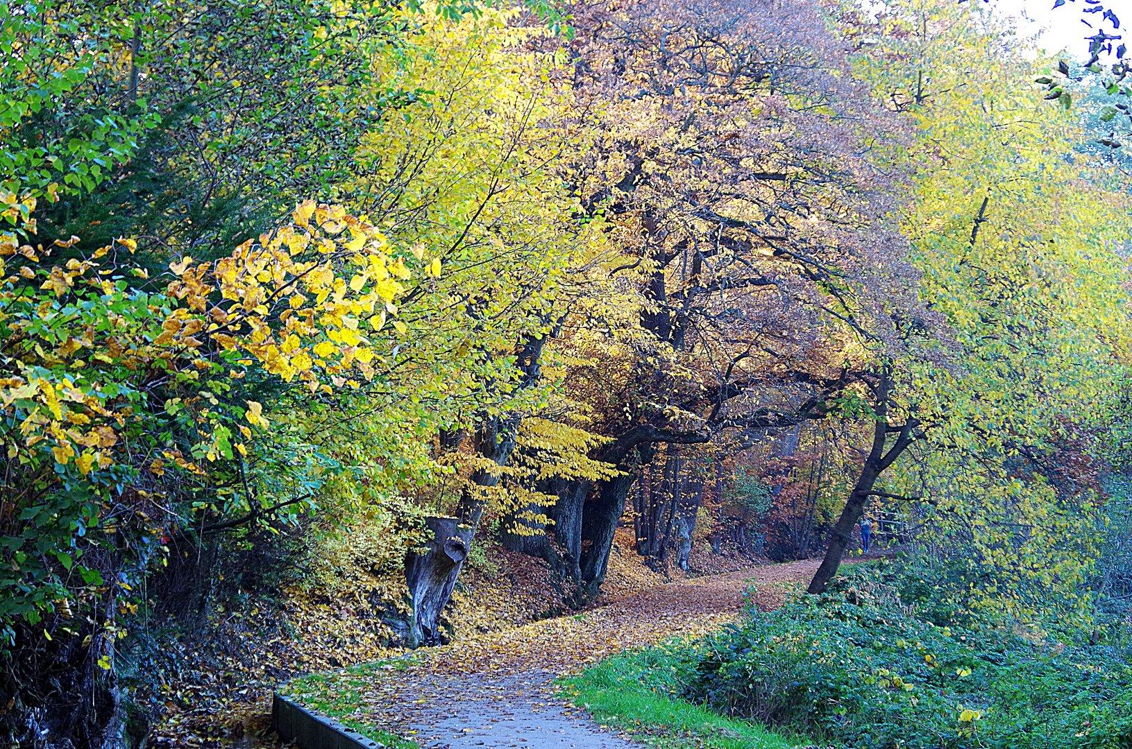Bachpfädchen im Herbst