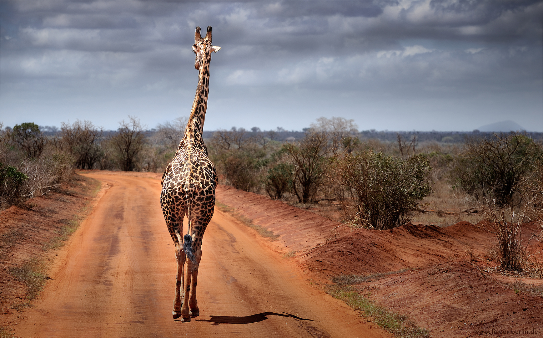 Back Of Africa