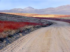 Back Road In Bloom 3