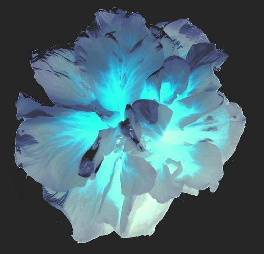 Backlit Blue
